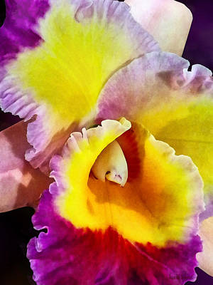 Yellow And Magenta Cattleya Orchid Print by Susan Savad