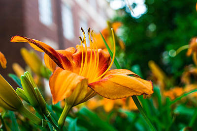 Campus Photograph - Yellow And Orange Flower by Nathan Hillis