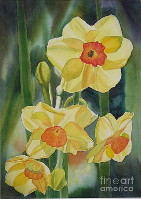 Daffodil Painting - Yellow And Orange Narcissus by Sharon Freeman