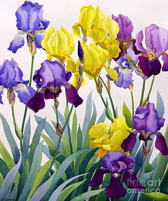 Yellow And Purple Irises Print by Christopher Ryland