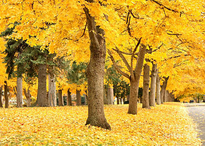 Fall Scenes Photograph - Yellow Autumn Wonderland by Carol Groenen