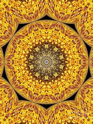 Yellow Burst  Print by Annette Allman