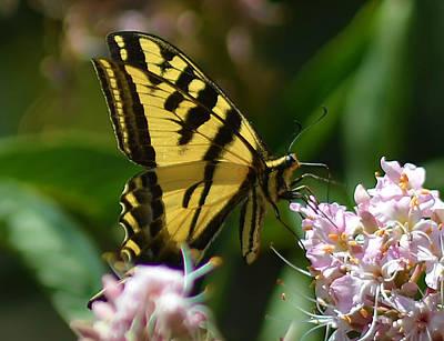 Fluttering Digital Art - Yellow Butterfly by Camille Lopez