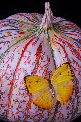 Yellow Butterfly Photograph - Yellow Butterfly On Pumpkin by Garry Gay