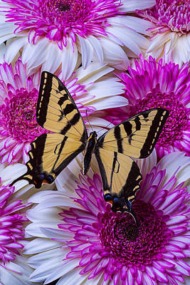 Yellow Butterfly Photograph - Yellow Butterfly Resting by Garry Gay