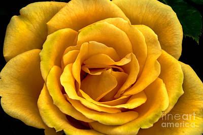 Yellow Close-up Print by Robert Bales