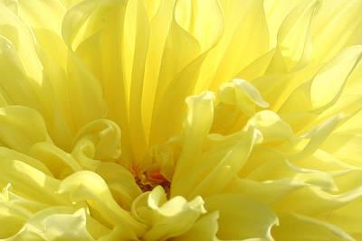 Yellow Dahlia Burst Print by Ben and Raisa Gertsberg