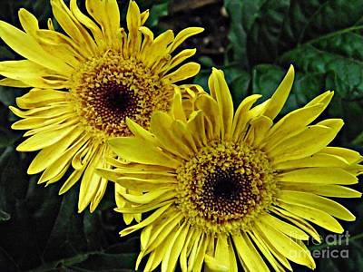 Yellow Daisies Original by Sarah Loft