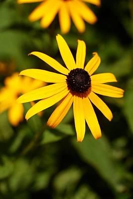 Maddox Photograph - Yellow Daisy  by Justin Maddox