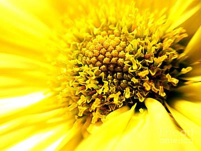 Yellow Daisy Stamen Print by Maggie Vlazny
