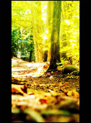 Photograph - Yellow Discin Day by Alicia Forton