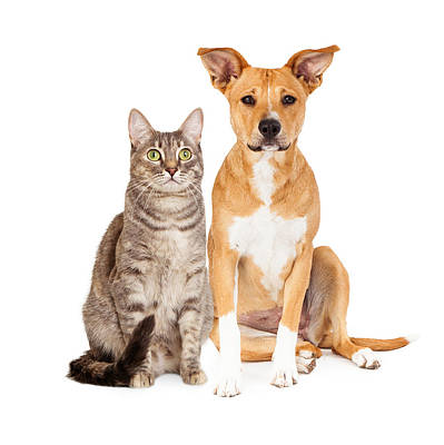 Yellow Dog And Tabby Cat Print by Susan  Schmitz