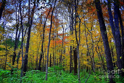 Indiana Photograph - Yellow Fall Trees  by Amy Lucid