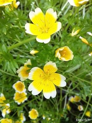 Manipulation Photograph - Yellow Flower by Eddie G