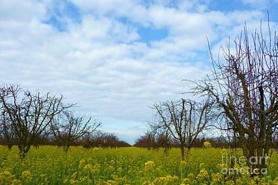 Tree Photograph - Yellow Flower Grove by Joshua Greeson
