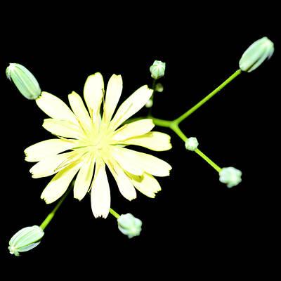 Yellow Flower Original by Toppart Sweden
