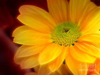 Yellow Flowerglow Print by Lutz Baar