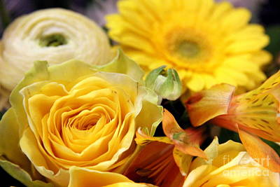 Rose Photograph - Yellow Flowers by Amanda Mohler