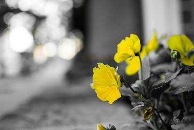 Yellow Flowers Print by Nathan Hillis