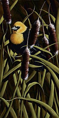 Yellow Headed Blackbird And Cattails Print by Rick Bainbridge