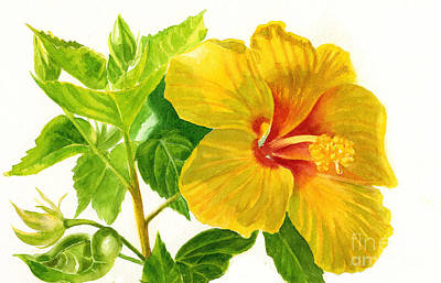 Yellow Hibiscus Flower Print by Sharon Freeman