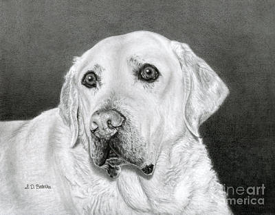 White Drawing - Yellow Labrador Retriever- Bentley by Sarah Batalka