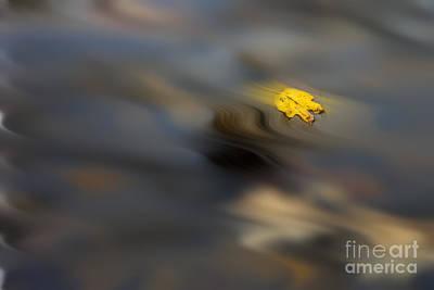 Yellow Leaf Floating In Water Print by Dan Friend