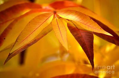 Yellow Leaves At Dawn Print by Deb Halloran