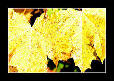 Yellow Maple Leaves Original by Toppart Sweden