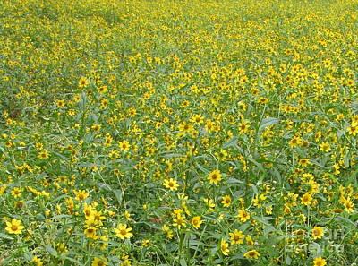 Yellow Meadow Print by Joshua Bales