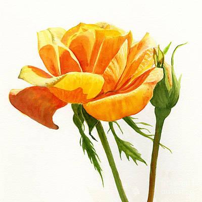 Yellow Orange Rose With Bud On White Print by Sharon Freeman