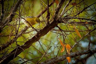 Warbler Digital Art - Yellow Pink Warbler by Linda Unger
