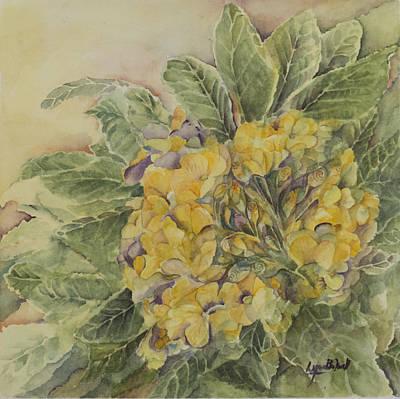 Yellow Primrose Print by Lynne Bolwell