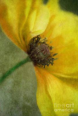 Blume Photograph - Yellow Poppy by Priska Wettstein
