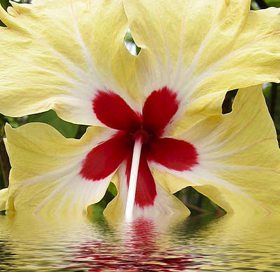 Rose Photograph - Yellow Red Hibiscus In Water by Kurt Van Wagner