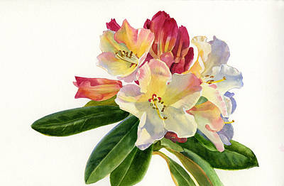 Rhododendron Painting - Yellow Rhododendron With White Background by Sharon Freeman