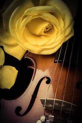 Violin Bows Violin Bows Photograph - Yellow Rose On Violin by Garry Gay