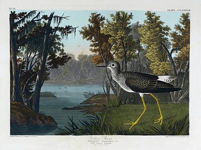 The Bird Photograph - Yellow Shank by British Library
