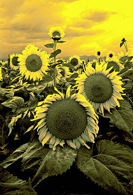 Abstact Photograph - Yellow Sky Yellow Flowers. by James Steele