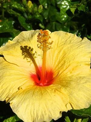 Yellow Tropical Flower  Print by Shaun Maclellan