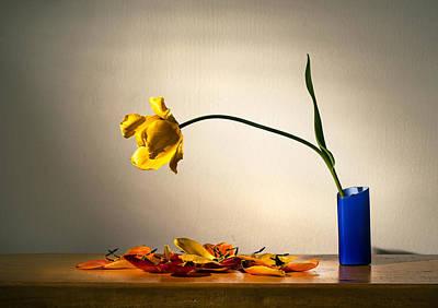 Yellow Tulip 2 Print by Ivan Vukelic