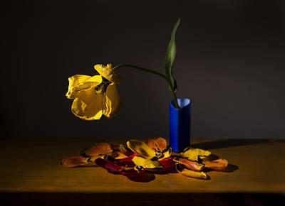 Yellow Tulip Print by Ivan Vukelic