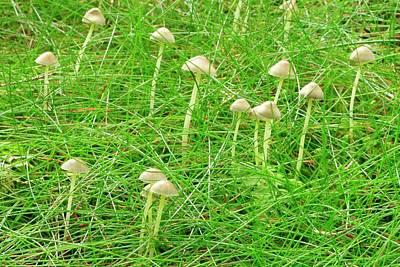 Mushroom Photograph - Yellowleg Bonnet Mushrooms by John Wright