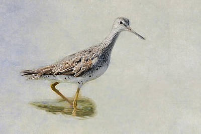 Sandpiper Digital Art - Yellowlegs by Bill Wakeley