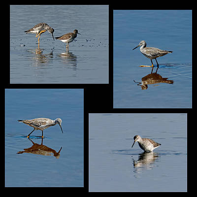 Collage Photograph - Yellowlegs Collage by Dawn Currie