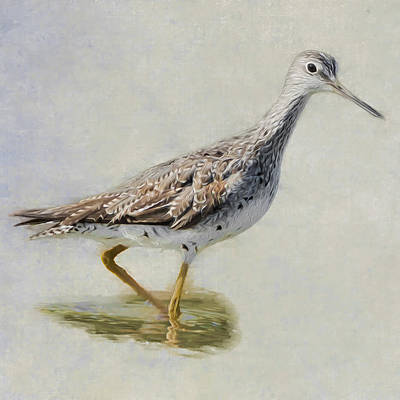 Sandpiper Photograph - Yellowlegs Square by Bill Wakeley