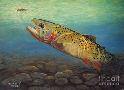 Yellowstone Cut Takes A Salmon Fly Print by Rob Corsetti
