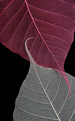 Yin-yang  Print by Maggie Terlecki