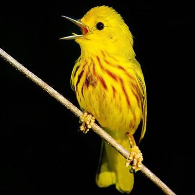 You Calling Me Yellow Original by John Absher