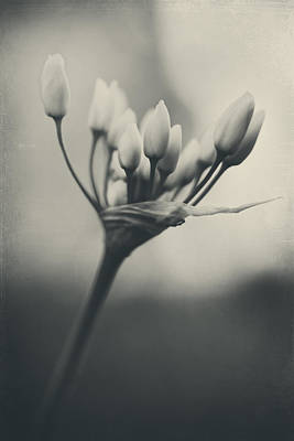 White Flower Photograph - You Will Always Be by Laurie Search